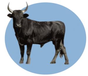 Personality Type - Bull