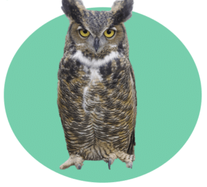 Personality Type - Owl