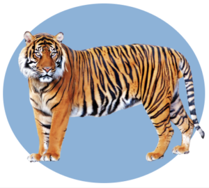 Personality Type - Tiger